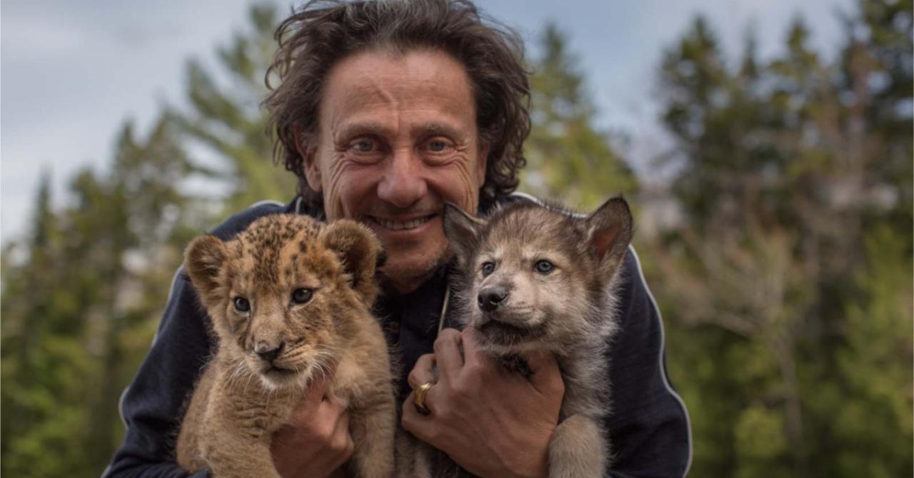 Read more about the article After Mia and the White Lion, what is Gilles de Maistre's Le Loup et le lion? [critique]