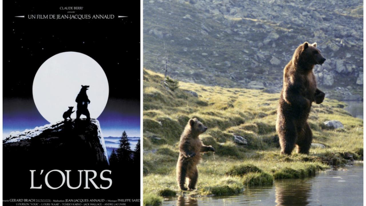 Ce soir sur la 20 - L'Ours de Jean-Jacques Annaud Ours