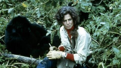 Télécharger Gorilles dans la brume [DVDRiP MKV] …