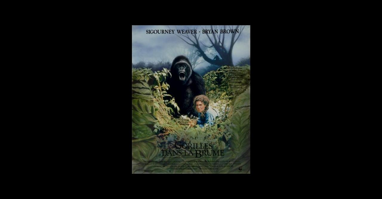Gorilles dans la brume streaming vf - streamlook.net